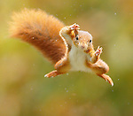 Super squirrel flies through the air by Jens Stahl
