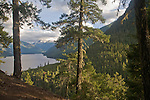 Little Beaver trail, North Cascades National Park, wilderness, Ross Lake National Recreation Area, Cascade Mountains, Washington State, Pacific Northwest, Old growth conifer forest,..