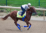 APRIL 30, 2015:Dortmund, trained by Bob Baffert exercises in preparation for the 141st Kentucky Oaks during morning workouts at Churchill Downs in Louisville, Kentucky. Ting Shen/ESW/Cal Sport Media