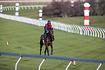 Audarya, trained by James R. Fanshawe, exercises in preparation for the Breeders' Cup Filly & Mare Turf at Keeneland 11.03.20.