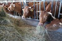 - breeding of bovines....- allevamento di bovini