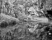 Fall color on the West Fork Oak Creek. Red Rock Secret Mountain Wilderness, Arizona.