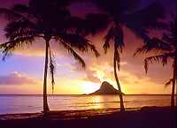 The sun rises behing Chinaman's Hat on the east shore of Oahu. Palm trees are sillouetted by the sky as it turns from purple to gold.
