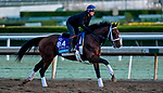 October 30, 2019: Breeders' Cup Juvenile Turf entrant Our Country, trained by George Weaver, exercises in preparation for the Breeders' Cup World Championships at Santa Anita Park in Arcadia, California on October 30, 2019. Scott Serio/Eclipse Sportswire/Breeders' Cup/CSM