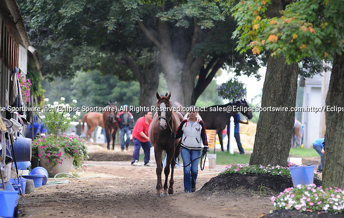 16 August 2008: Horses cool down on the backstretch at Saratoga Race Course in Saratoga Springs, New York.