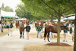 11 September 2010.  Yearlings being shown at the Keeneland September Yearling Sale.