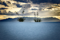 Yuccas at twilight silhouetted against a stormy sky at White Sands National Monument in New Mexico's Tularosa Basin