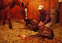 Farm manager with a newborn foal on a Kentucky thoroughbred horse farm.