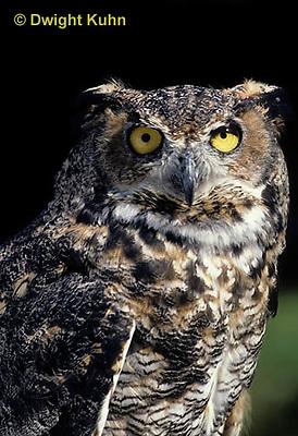 OW06-054z  Great horned owl - Bubo virginianus