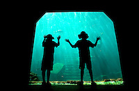Two boys watch fish swimming in the aquarium of Atlantis, a tourist destination in of Paradise Island, Nassau, The Bahamas. The newest section of Atlantis is Aquaventure (AQUAVENTURE), a 141-acre waterscape and billion-dollar development. Aquaventure is available to all resort guests, as well as visitors to Nassau (including cruise ship travelers) who wish to purchase tickets separately.  With the addition of Aquaventure, Atlantis as now one of the largest water-themed attraction in the world, containing more than twenty million gallons of water. The park has water slides, a mile-long river ride with high intensity rapids and wave surges, and never-seen-before special effects..