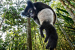 Madagascar: Lemurs