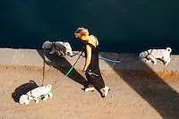 Woman walking three dogs on leash. L'Herault river. Agde town. Languedoc. France. Europe.