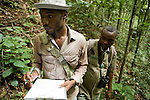 Botanist Ulrich Bogendre and field assistant looking at trees in lowland rainforest for carbon study, Lope National Park, Gabon