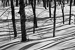 Winter landscape, Hokkaido, Japan