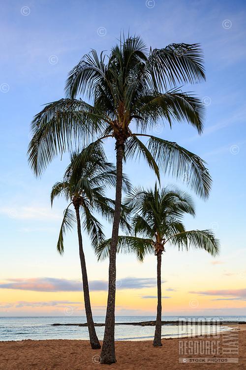 Three coconut palm trees stand tall at dawn at Salt Pond Beach Park, Hanapepe, Kaua'i.