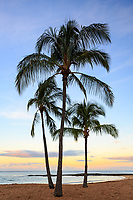 Three coconut palm trees stand tall at dawn at Salt Pond Beach Park, Hanapepe, Kaua'i.