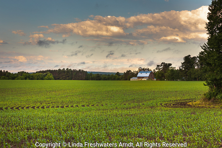 Barn and corn field in northern Wisconsin.