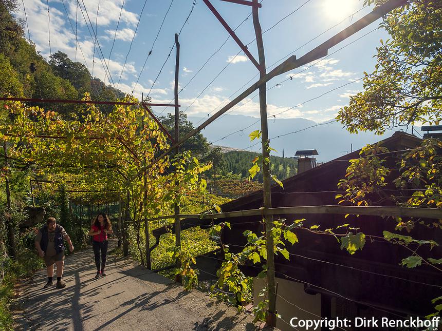 Weinbau  beim Konrad,  Algund bei Meran, Region Südtirol-Bozen, Italien, Europa<br /> wine cultivation at Konrad,  Lagundo village near Merano, Region South Tyrol-Bolzano, Italy, Europe