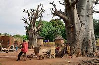 BURKINA FASO , Gaoua, Kampti, Lobi culture, village JILENYUORA, Baobab tree, men drinking Dolo the millet beer from calabash / Lobi Ethnie, Dorf JILENYUORA, Baobab Baeume, Maenner trinken Hirsebier aus Kalabasse