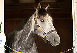 10 April 2010.   Informed Decision resting in her stall on a beautiful Bluegrass Stakes day morning.