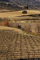 Europe/France/Languedoc-Roussillon/11/Aude/AOC Corbières: Le vignoble aux environs de Monze