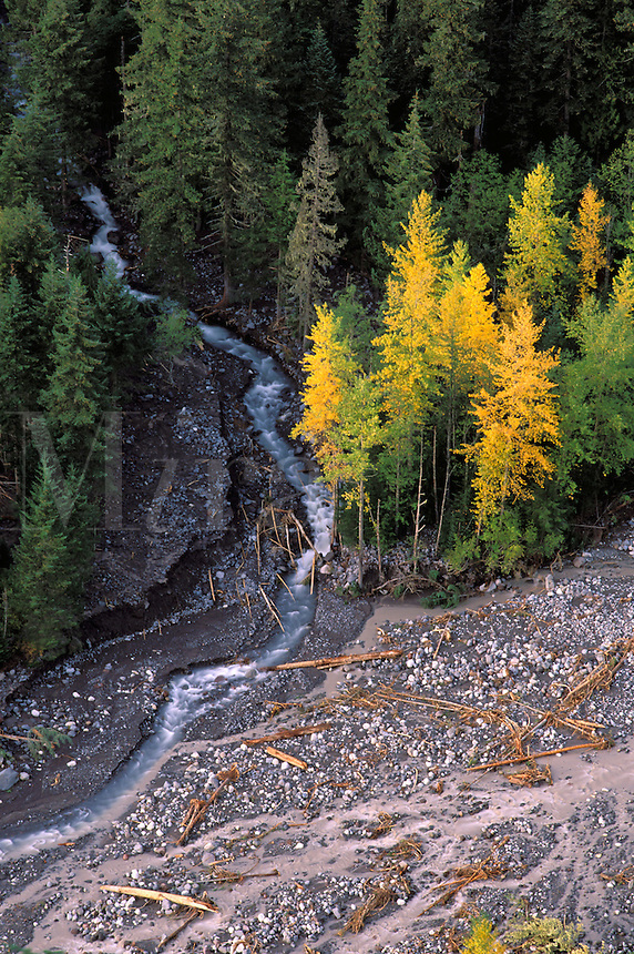 Van Trump Creek joins Nisqualie River in forested valley bottom, from Rucksecker Point, Mount Rainier National Park, Lewis County, Pierce County, W