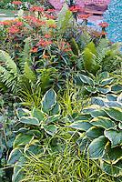 Hosta Northern Exposure, Carex elata, euphorbia, ferns, in unique planting combination