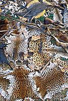 Apreensão de peles de animais pelo IBAMA. 1988. Foto de Juca Martins.