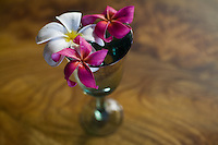 "Plumeria flowers on mango wood table. Plumeria, or """"frangipani"""" is a fragrant blossom deeply tied to Hawaii and its culture."