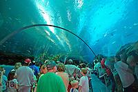 Interior people at Georgia Aquarium in Atlanta Georgia