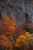 Autumn trees against the steep grey cliffs near Fudou no Taki, Nagano, Japan.