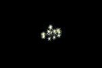 Trichodesmium  bacteria cluster, Black Water Diving; Florida Atlantic Diving; Plankton; larval fish; pelagic larval marine life; plankton creatures, jellyfish; SE Florida, Atlantic Ocean; Gulf Stream current