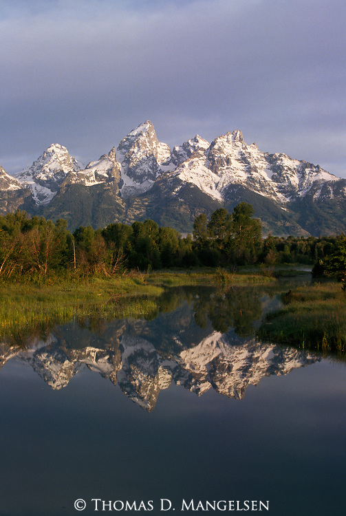 Tetons reflected in a beaver pond in Grand Teton National Park, Wyoming.