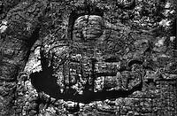 Zoomorph P. South C. 746-850 AD. Quirigua Guatemala