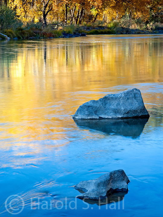 The gold from cottonwood trees reflect in the Rio Grand River in the Taos Gorge New Mexico