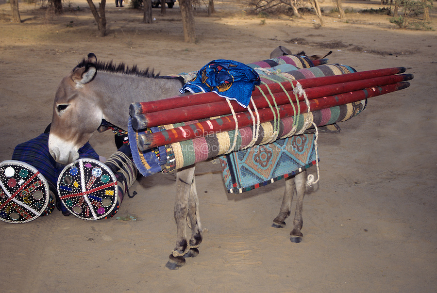 Akadaney, Central Niger, West Africa.  Fulani Nomads.  Poles and Mats of Portable Bed Loaded on Donkey for Transport.