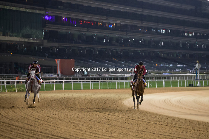 DUBAI,UNITED ARAB EMIRATES-MARCH 24: The brothers Lani (left) and Awardee (right),trained by Mikio Matsunaga (both) ,exercises in preparation for the Dubai World Cup at Meydan Racecourse on March 24,2017 in Dubai,United Arab Emirates (Photo by Kaz Ishida/Eclipse Sportswire/Getty Images)