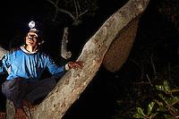Pak Hamsah on a branch next to a nest of Apis dorsata, the giant bee of Asia whose geographic area stretches west to east from Pakistan to Bornéo and north to south from the Himalayas to Sri Lanka.///Pak Hamsah sur une branche à côté d'un nid d'Apis dorsata, l'abeille géante d'Asie dont l'ère géographique s'étend d'Ouest en Est, du Pakistan à Bornéo, et du Nord au Sud de l'Himalaya au Sri Lanka.