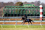 November 4, 2020: Mighty Gurkha, trained by trainer Archie Watson, exercises in preparation for the Breeders' Cup Juvenile Turf Sprint at Keeneland Racetrack in Lexington, Kentucky on November 4, 2020. Jon Durr/Eclipse Sportswire/Breeders Cup