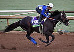 ARCADIA, CA - OCT 31: Midnight Storm, owned by Venneri Racing Inc. & Little Red Feather Racing and trained by Philip D'Amato, exercises in preparation for the Breeders' Cup Michael Stidhamat Santa Anita Park on October 31, 2016 in Arcadia, California. (Photo by Scott Serio/Eclipse Sportswire/Breeders Cup)