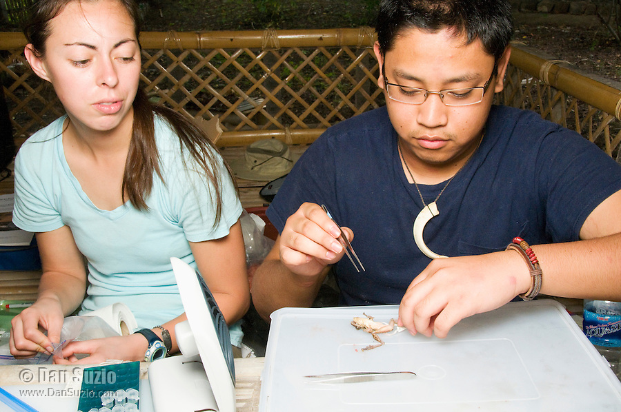 American herpetology students Caitlin Sanchez (left) and Jester Ceballos prepare specimens at their makeshift research station at Tua Koin Resort, Atauro Island, Timor-Leste (East Timor)