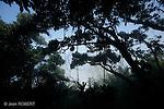 forêt du  Pain de Sucren  un pic rocheux de 395 mètres qui domine rio de Janeiro