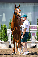 AUS-Andrew Hoy presents Vassily De Lassos during the Eventing 1st Horse Inspection. Tokyo 2020 Olympic Games. Thursday 29 July 2021. Copyright Photo: Libby Law Photography