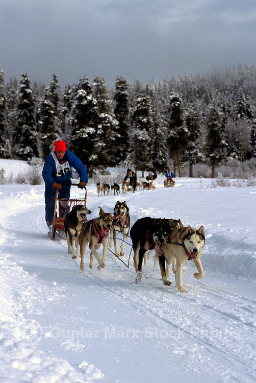 International Sled Dog Racing near Falkland, in the North Okanagan Region of British Columbia, Canada