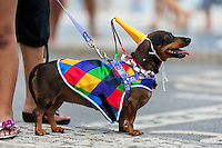 A dachshund dog, dressed in a fancy costume, takes part in the Blocao pet carnival show at Copacabana beach in Rio de Janeiro, Brazil, 12 February 2012.