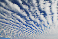 """Altocumulus Undulatus """"billows"""" clouds produce what is known as a """"mackerel sky"""" in late fall over Norman Oklahoma."""