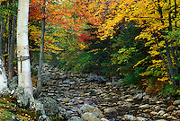 NH, Glen House, New Hampshire, White Mountain National Forest, Colorful fall foliage along the Peabody River in the White Mountain Nat'l Forest in autumn.