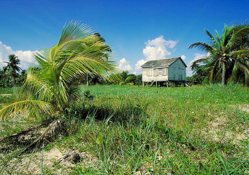Native house on the beach at Placencia, Belize. Placencia, Belize Central America.