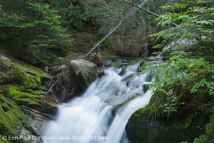 Abenaki Brook near Edmands Path during the summer months. Located in the White Mountains, New Hampshire USA