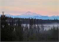 Mt. McKinley is lit by the early morning sun as it looms over the mist-shrouded forest near Petersville, Alaska.